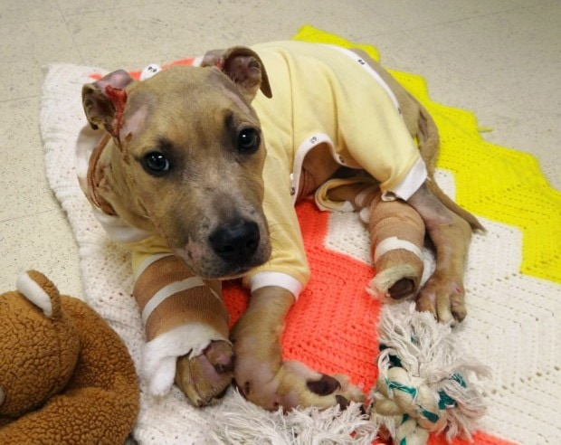 Arrest made in dragging of St. Louis puppy