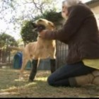 Tortured Dog Walks again after Receiving Prosthetic Legs