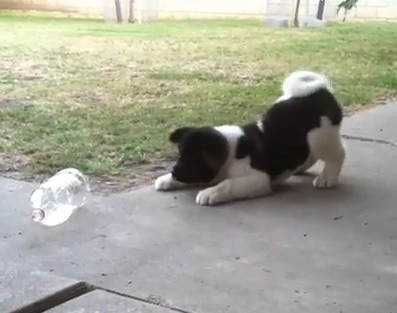 Puppy vs. Pop Bottle