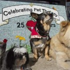 Woody Pet Therapy Program Celebrates 25th Anniversary
