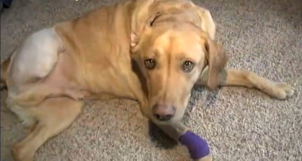 """Miracle Dog"" Survives Brush with Death and Brings Family Together"