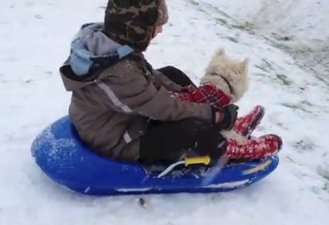 Boy and His Dog Go Sledding