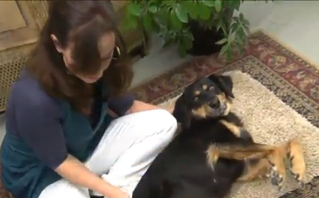 Massage Therapy Helps Paralyzed Dog Walk Again