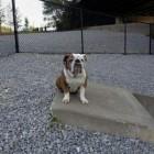 Cincinnati Dog Park Funded by Pub Crawl