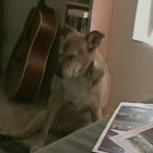 Dog Falls Asleep Sitting Up