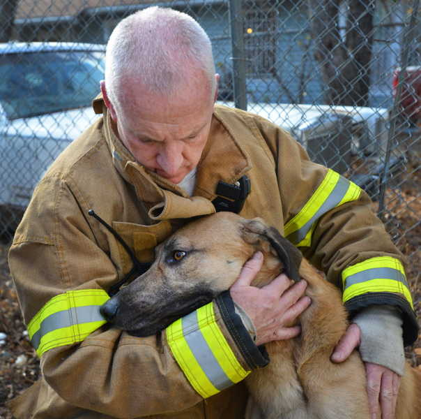 Heroic Firefighters Revive Dog Pulled From House Fire