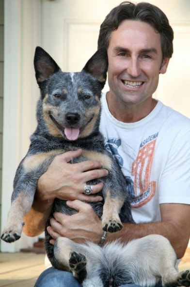 american pickers star mike wolfe speaks up for pit bulls. Black Bedroom Furniture Sets. Home Design Ideas
