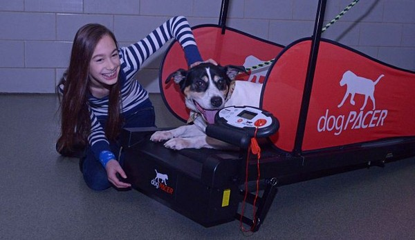 12-Year-Old Girl Fundraises and Donates Dog Treadmills to Shelters