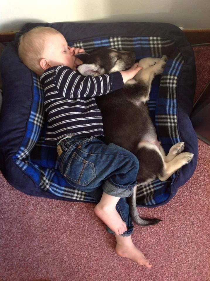 The Saturday Pet Blogger Hop: Casey Makes a New Friend