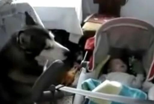 Babysitting Dog