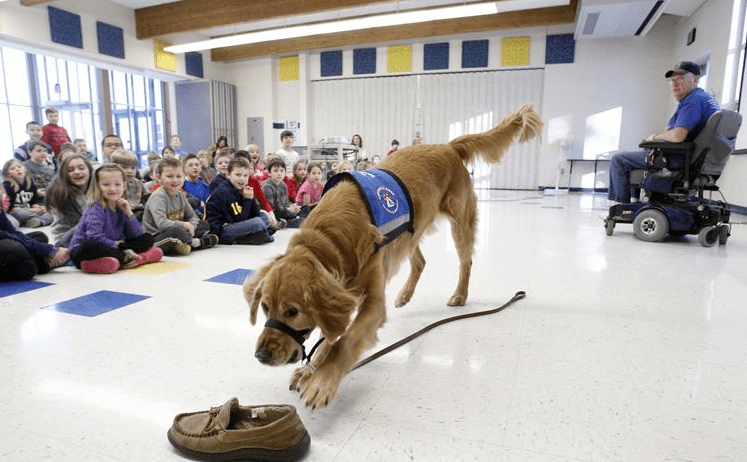 Educating children about the role of service dogs