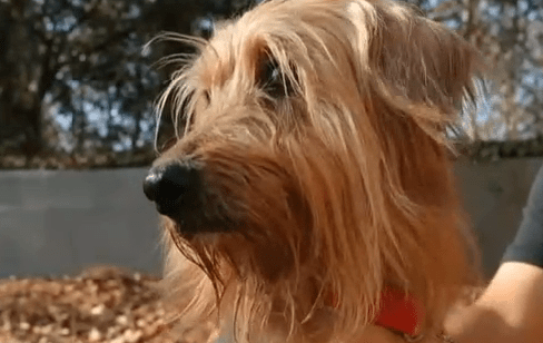 The story of Shaggy, rescued and back to being a dog