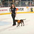 Hockey team has helped over 1,000 dogs find forever homes