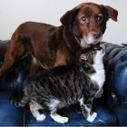 Blind Dog And His Guide Cat are Best Friends