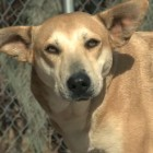 Tails of Hope – Autumn the Pregnant Stray Dog