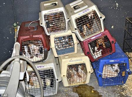 President of Animal Rescue Charged with 120 Counts of Animal Neglect