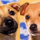 This year's Puppy Bowl will feature puppies rescued from Puerto Rico's Dead Dog Beach