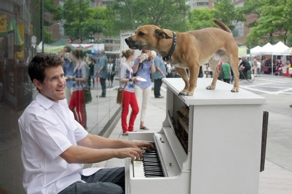 Dog travels the Americas to spread the love of music