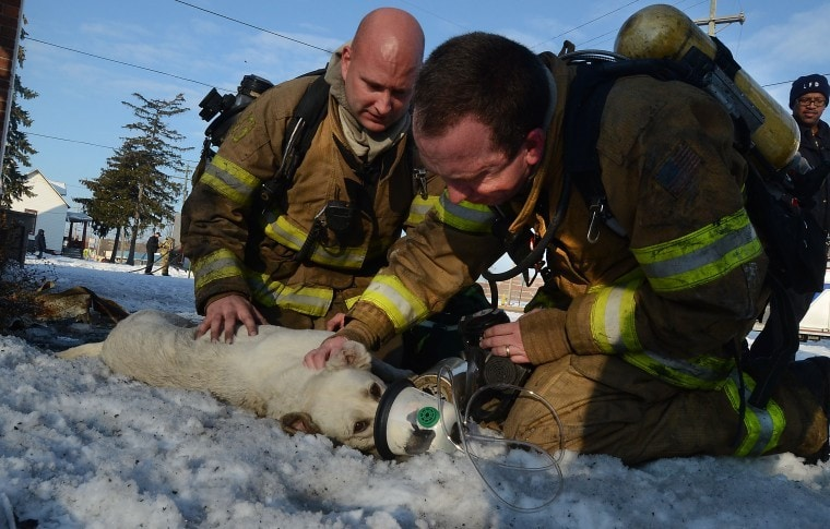 Firefighters use new oxygen mask to save dog