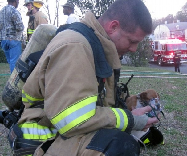 Firefighters revive six-week-old puppy