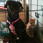 Dog and kitten looking for a home after being found freezing by the side of a road