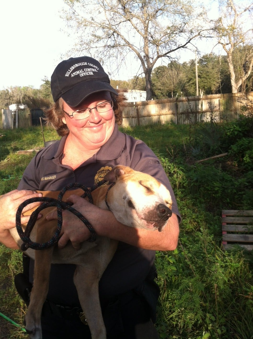 Twenty-Six pit bulls rescued from dog fighting ring in Florida