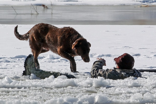 Loyal dog stays by owner who fell through the ice until help comes