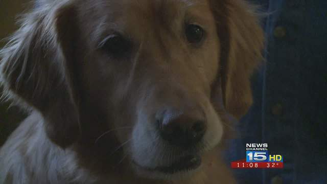 Diabetes-detecting service dog saves owner's life