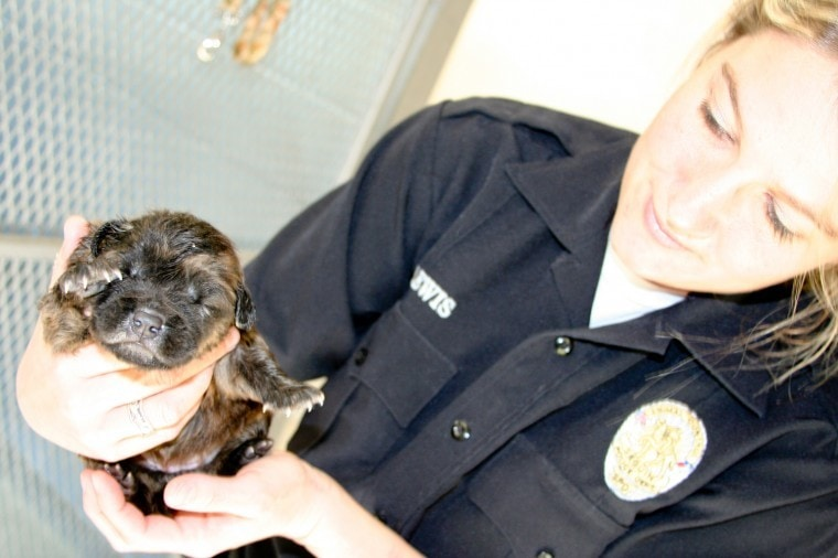 Shelter puppy rescued from a drain pipe