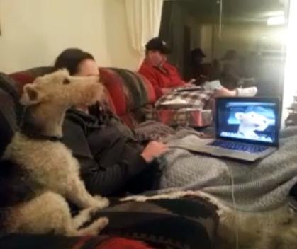 The Saturday Pet Blogger Hop: Skype Dog