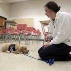 University of Kentucky students training service dogs