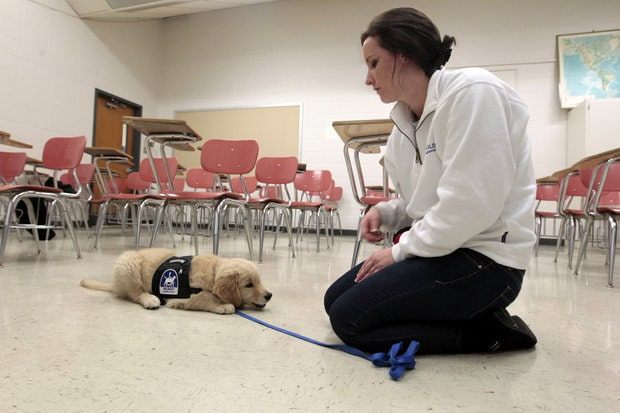 University of Kentucky students training service dogs