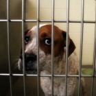 PA House Passes Bill to Make Abusers Pay For Care of Seized Animals