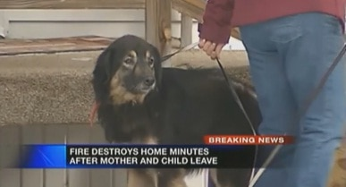 Letter Carrier Saves Unconscious Dog Trapped in Burning Home
