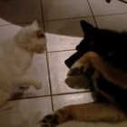 Cat vs. Dog – Who Will Win?
