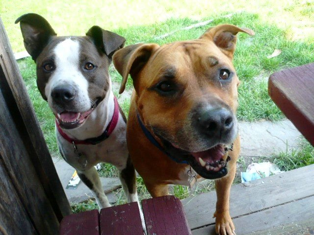 Connecticut Proposes Bill to Ban Breed Specific Legislation