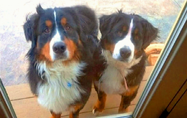 Justice for Argus and Fiona:  Senator Introduces Anti-Dog Killing Bill