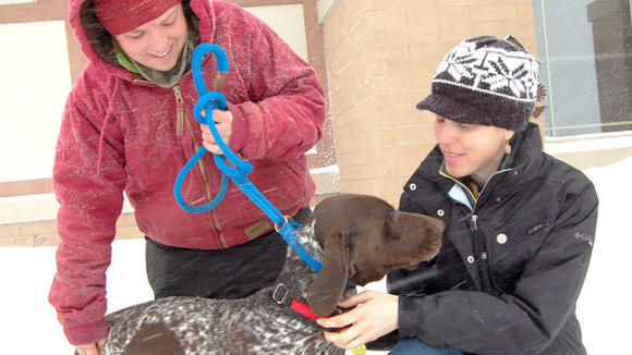 Dog Goes from Homeless Home-Wrecker to Beloved Rescue Dog