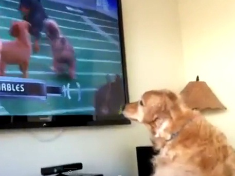 Dog Loves Watching Puppy Bowl