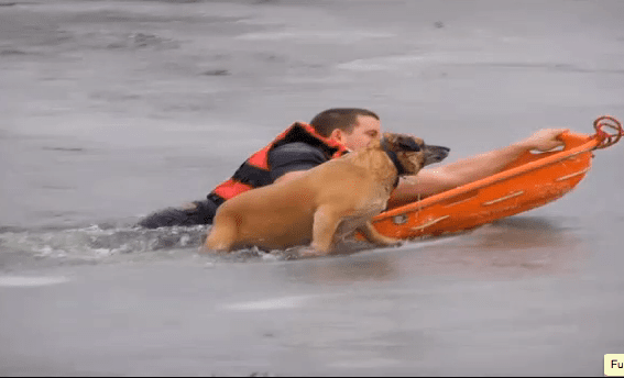 Dog saved from misadventure on frozen pond