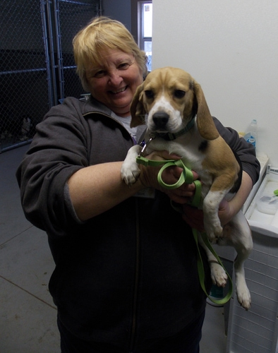 Rescuers work around the clock to bring stray beagle out of the cold