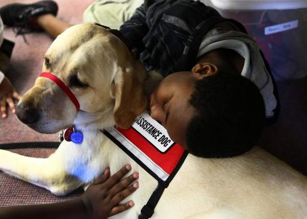 School 19 gets a new family member, service dog Blaze