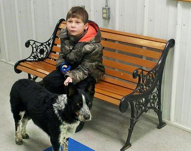 Nine-year-old boy wins trust of elusive stray dog