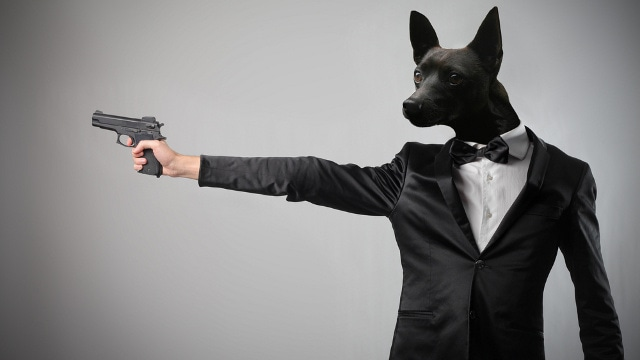 Loaded guns and dogs are a bad combination