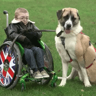 Three-legged dog giving disabled boy a new lease on life