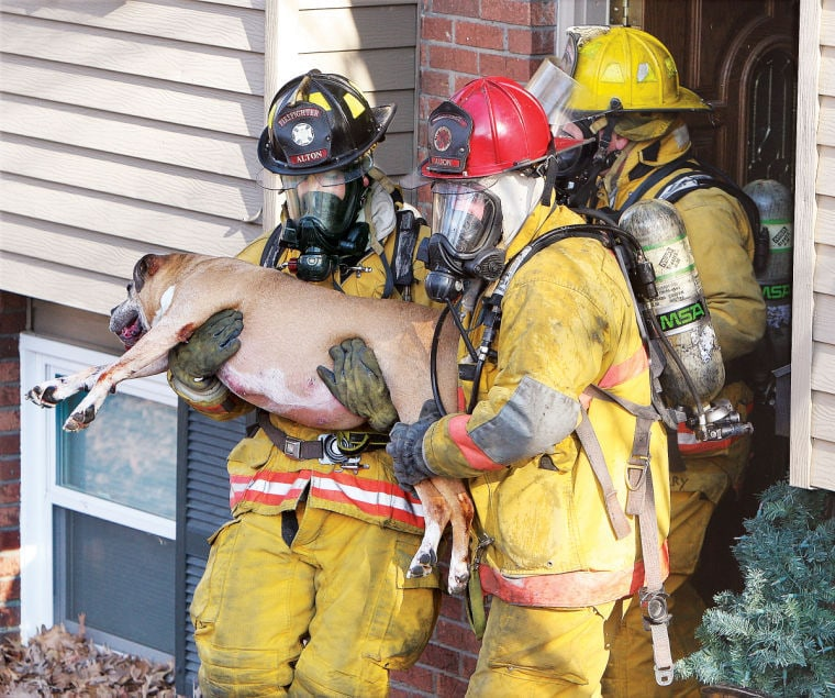 Firefighters save the life of a boxer trapped in a fire