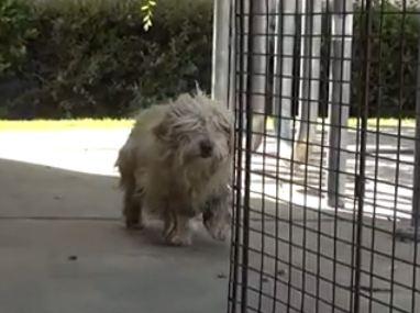 Dog Rescue: Socrates