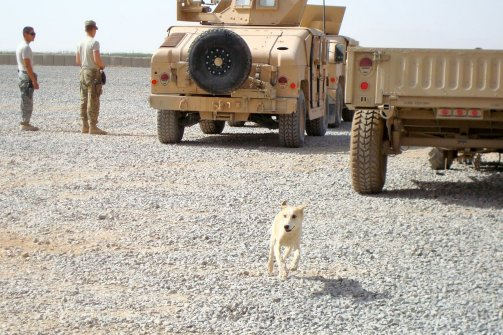 My Dog Solha: From Afghanistan, with PTSD