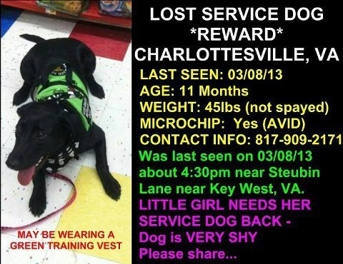 11-Year-Old Needs Help Finding Missing Service Dog