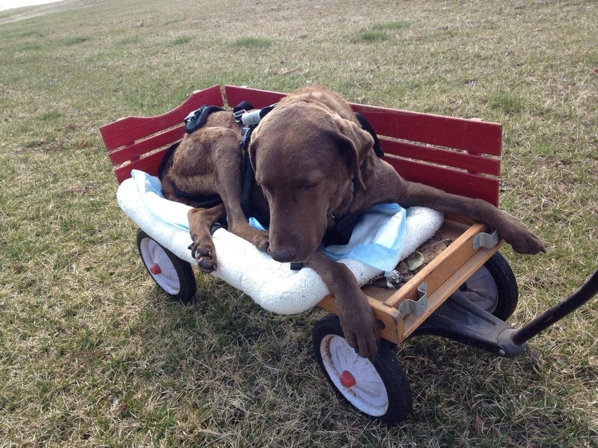 Owner's Love for Disabled Dog Goes Viral